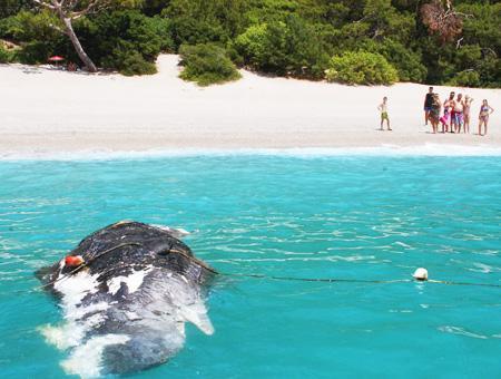 Mugla fethiye playa ballena muerta