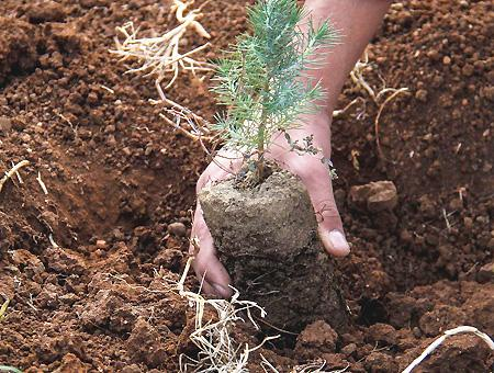 Naturaleza plantacion arboles reforestacion