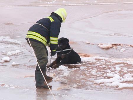 Sivas rescate perro hielo