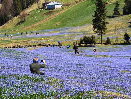 Trabzon kadiralak floracion primavera