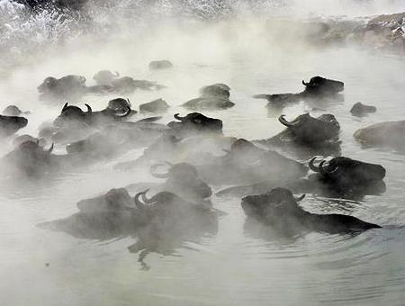 Bitlis bufalos aguas termales invierno