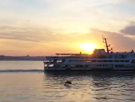 Estambul delfines bosforo