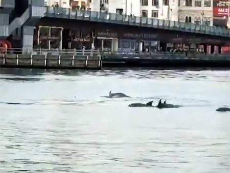 Estambul galata delfines