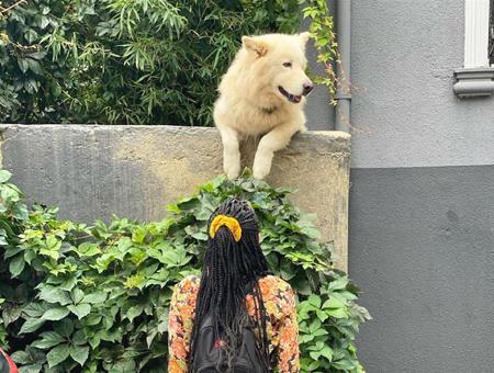 Estambul rocky perro viral