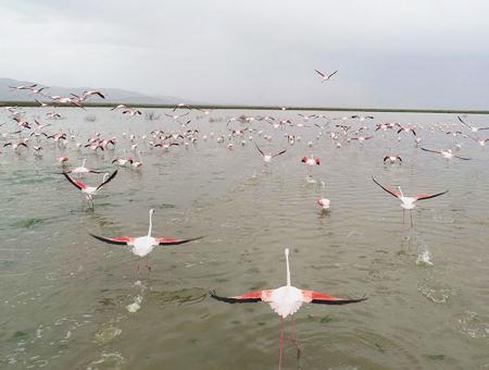 Turquia flamencos lago konya