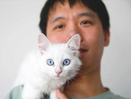 Turquia joven chino gato van