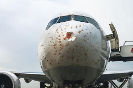 Avion turkish airlines pajaros