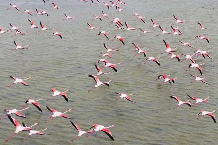 Turquia espectaculo flamencos primavera