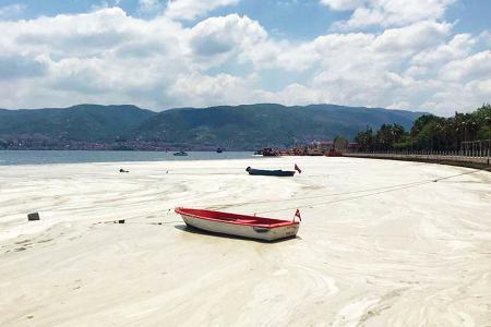 Turquia mucilago marino mar marmara