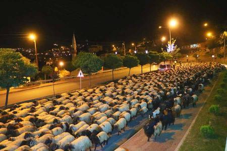 Turquia policia escolta ovejas